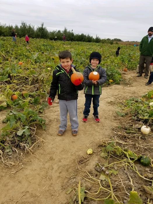 Kindergarten pumpkin picking!